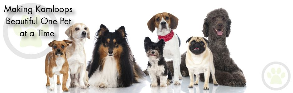 Making Kamloops Beautiful One Pet at a Time | Pawsitively Pets: Certified Dog Groomer